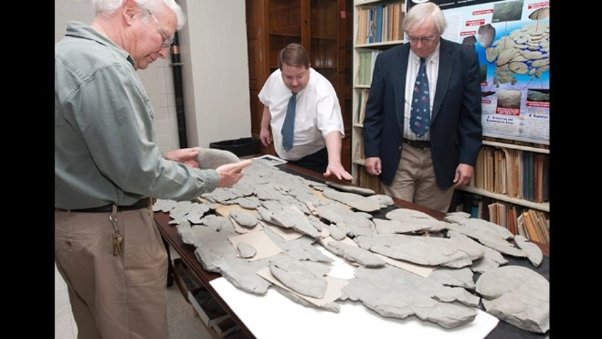 Paleontologist David Meyer, left and Carlton Brett, right, flank Ron Fine, who discovered the large fossil spread out on the table -- though none is sure just what it is.