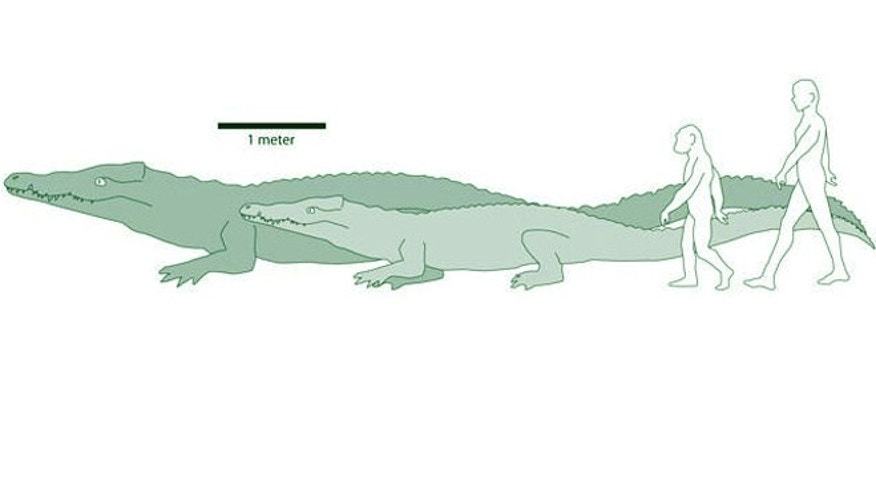 The illustration shows the comparative sizes of ancient/modern crocodiles and ancient/modern humans.