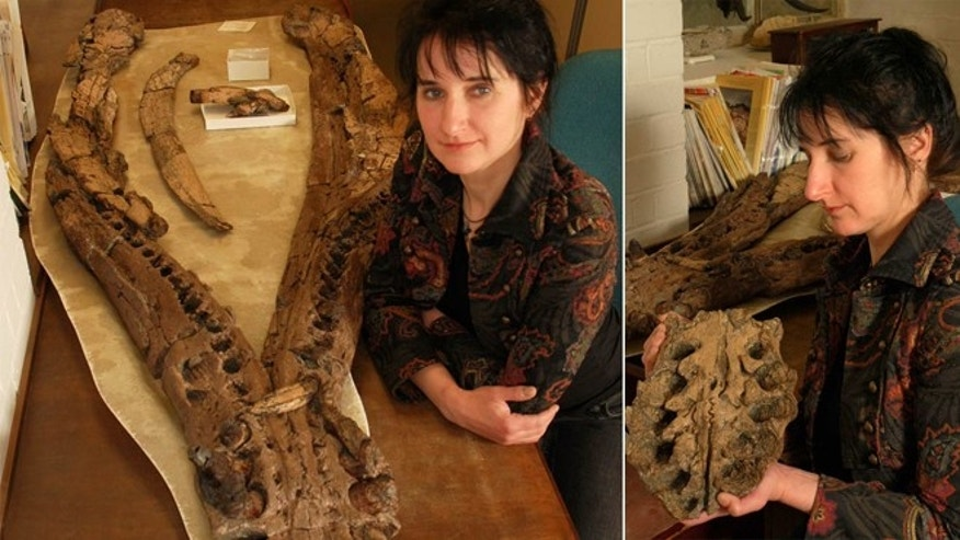 An old female pliosaur sported huge jaws (its lower jaw shown here with researcher Judyth Sassoon) and teeth about 8 inches (20 centimeters) long.