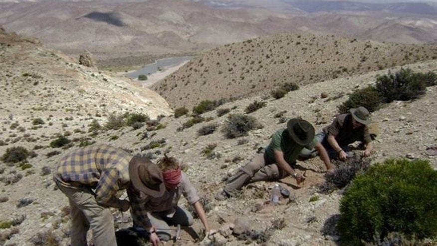 Researchers excavating the specimen of the abelelisaurid dinosaur named Eoabelisaurus mefi.