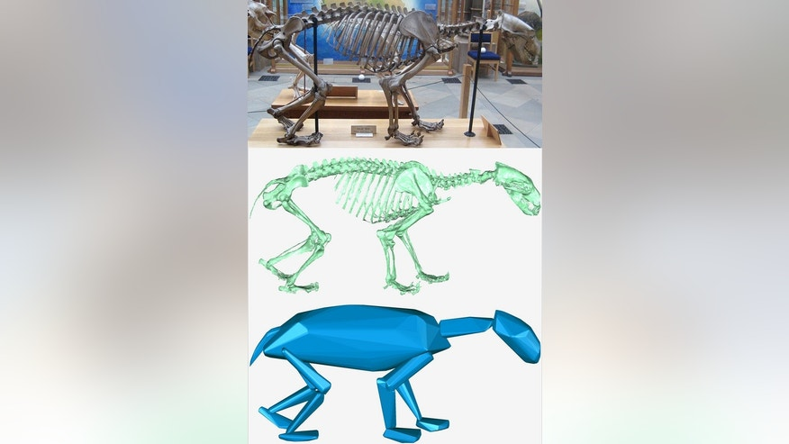 Diagram illustrating how a skeleton is turned into a computer model of an animal.