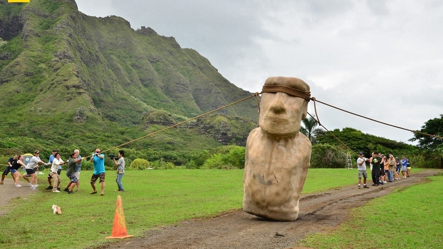Three teams, one on each side and one in the back, manage to maneuver an Easter Island statue replica down a road in Hawaii, hinting that prehistoric farmers who didn't have the wheel may have transported these statues in this manner. The experiment was led by archaeologists Terry Hunt and Carl Lipo and is reported in the July 2012 issue of National Geographic magazine.