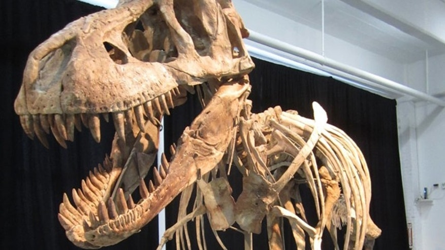An Asian relative of the North American Tyrannosaurus rex, this nearly complete Tyrannosaurus bataar sold on Sunday.