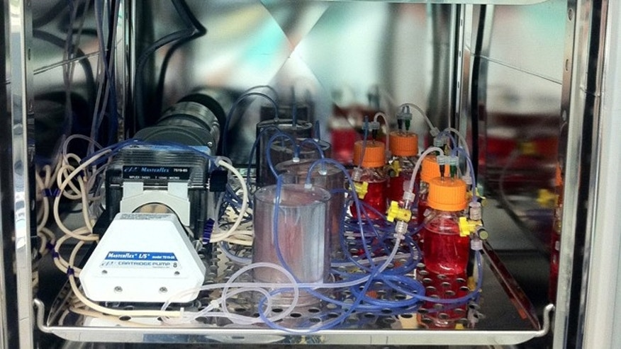 A peek at one shelf inside the lab's incubator, where multiple bioreactors are stored.