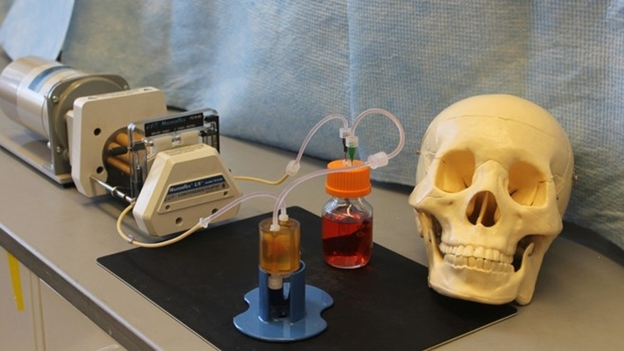 "Columbia scientists have grown over 50 bones in custom ""bioreactors"" on New York City campus."