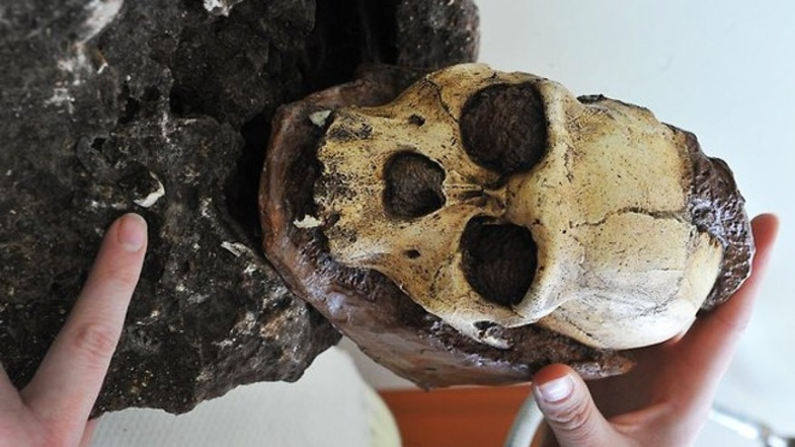 "A South African scientist shows the tooth hidden in a rock excavated from an archeological site three years ago. The remains of a juvenile hominid skeleton, of the new Australopithecus (southern ape) sediba species, are the ""most complete early human ancestor skeleton ever discovered."""