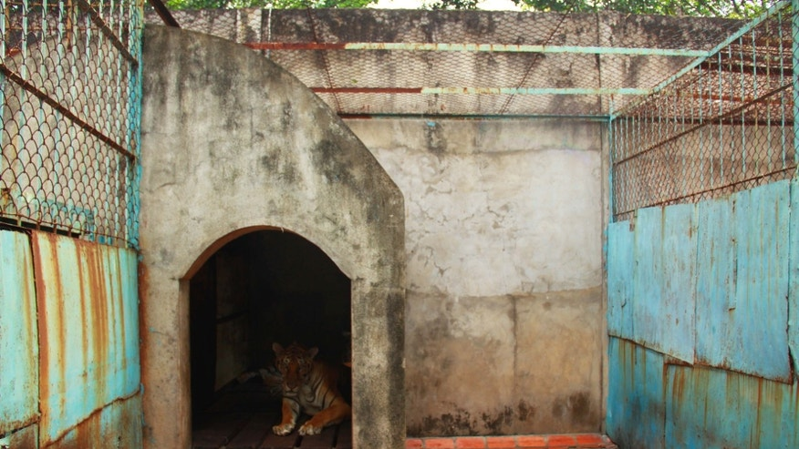 July 4, 2012: A tiger lies in a concrete shelter at a tiger farm in southern Binh Duong province, Vietnam.
