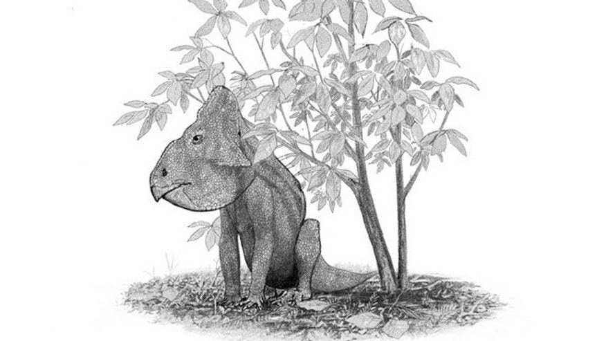 A Leptoceratops gracilis sits under a Magnolia tree; The Magnolia was amongst the first flowering plants to evolve, some 95 million years ago.