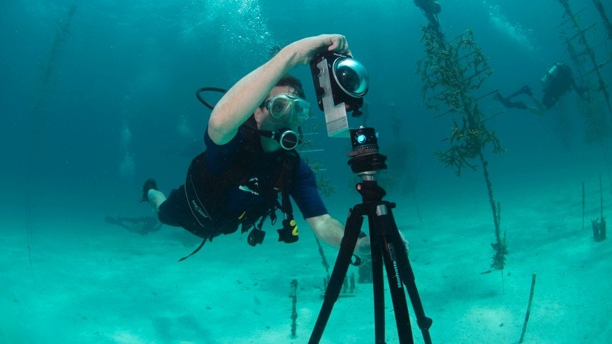 In this Aug, 9, 2014 photo provided by Catlin Seaview Survey, Mitchell Tartt, of the Office of National Marine Sanctuaries, trains to take 360-degree panoramas of the corals off the coast of Islamorada, Fla. U.S.