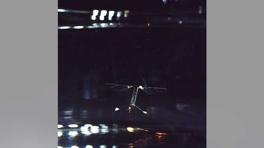 Using a modified flapping technique, researchers at the Harvard John Paulson School and Wyss Institute have demonstrate that the RoboBee can also swim. This is the first-ever aerial and aquatic capable insect-scale robot. (Photo by Harvard Microrobotics Lab)