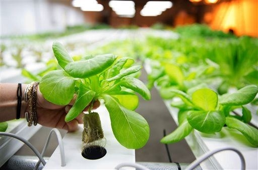 Farm Run By Robots Will Churn Out 30 000 Heads Of Lettuce