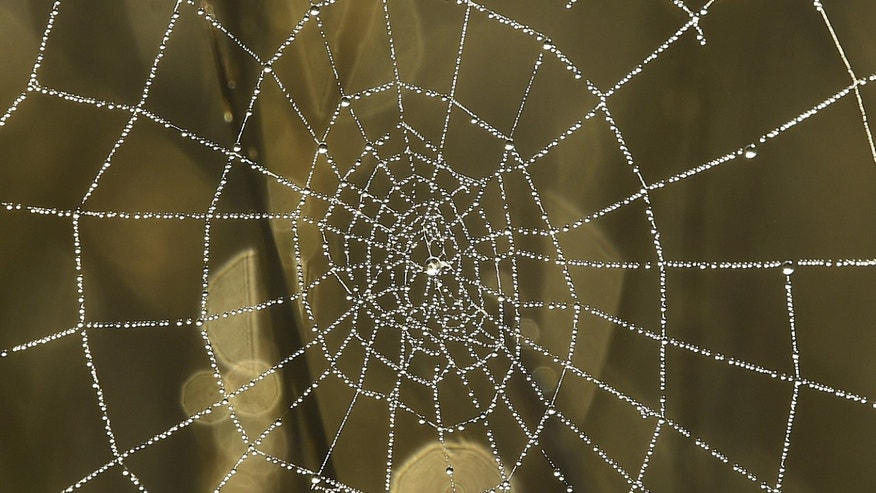 Dew drops on a spider web reflect the morning sun in Richmond Park in west London, Britain, October 2, 2015. (REUTERS/Toby Melville)