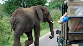 A bull elephant walks past a car filled with tourists in South Africa's Kruger National Park, December 10, 2009.  REUTERS/Mike Hutchings/File Photo - RTSF9SW