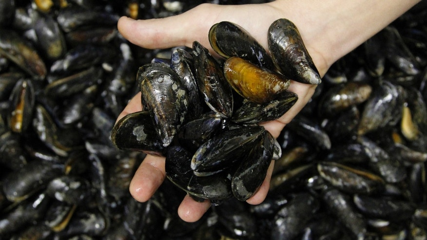 Navy funds study of underwater glue made using protein extracted from mussels