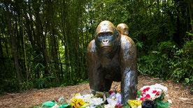 Flowers lay around a bronze statue of a gorilla and her baby outside the Cincinnati Zoo's Gorilla World exhibit, two days after a boy tumbled into its moat and officials were forced to kill Harambe, a Western lowland gorilla, in Cincinnati, Ohio, U.S. May 30, 2016.  REUTERS/William Philpott - RTX2EW07