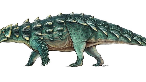 A life recreation of the newly discovered armored dinosaur named Zuul crurivastator from northern Montana seen in this illustration provided by the Royal Ontario Museum in Toronto, Canada, handout photo received May 9, 2017.  Illustration by Danielle Dufault/Royal Ontario Museum/Handout via REUTERS  FOR EDITORIAL USE ONLY. NOT FOR SALE FOR MARKETING OR ADVERTISING CAMPAIGNS NO RESALES. NO ARCHIVES. THIS IMAGE HAS BEEN SUPPLIED BY A THIRD PARTY. IT IS DISTRIBUTED, EXACTLY AS RECEIVED BY REUTERS, AS A SERVICE TO CLIENTS - RTS15X1M