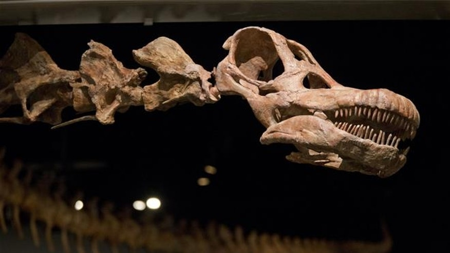 Asteroid that wiped out dinosaurs hit in exactly the wrong ...