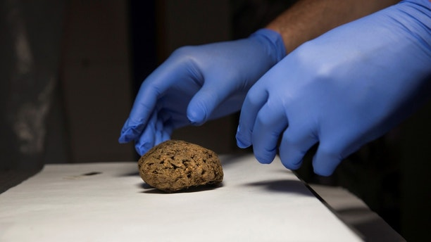 Fernando Serrulla, a forensic anthropologist of the Aranzadi Science Society, prepares to show one of the 45 brains saponified of those killed by forces of the dictator Francisco Franco which were found in 2010 in a mass grave around the area known as La Pedraja, at a laboratory in Verin, Spain, June 8, 2017. Picture taken June 8, 2017. REUTERS/Juan Medina - RTX3B4QM