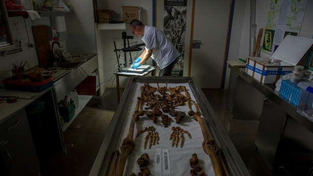 Fernando Serrulla, a forensic anthropologist of the Aranzadi Science Society, prepares to show one of the 45 brains saponified of those killed by forces of the dictator Francisco Franco which were found in 2010 in a mass grave around the area known as La Pedraja, at a laboratory in Verin, Spain, June 8, 2017. Picture taken June 8, 2017. REUTERS/Juan Medina - RTX3B4MU