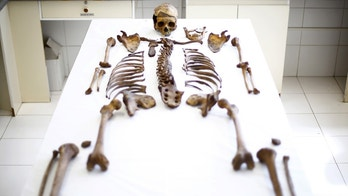 A skeleton of a victim executed during the rule of dictator Augusto Pinochet lies at the laboratory of Forensic Identification Unit in the Legal Medical Service at Santiago city, Chile, October 26, 2015. During Pinochet's 1973-1990 dictatorship, an estimated 3,200 people were murdered and another 28,000 tortured by the state. In the 25 years of democracy, there have been 1,149 convictions handed down for dictatorship-era human rights crimes.Picture taken October 26, 2015. REUTERS/Ivan Alvarado - GF20000042254