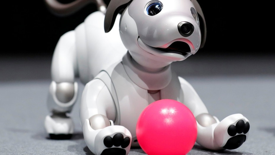 "File photo: Sony Corp's entertainment robot ""aibo"" is pictured at its demonstration in Tokyo, Japan November 1, 2017. (REUTERS/Kim Kyung-Hoon)"