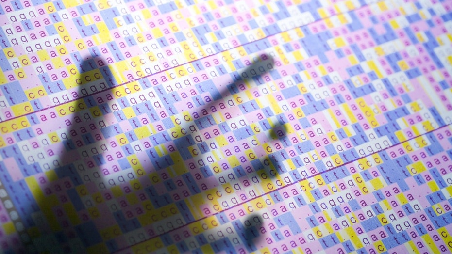 File photo - DNA code on screen with hand touching it