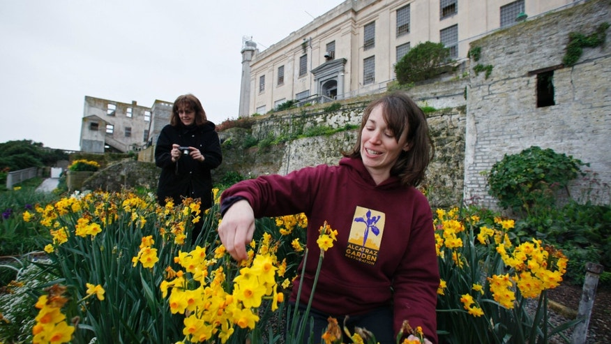 Shelagh Fritz, right, project manager of the Alcatraz Historic Gardens Project, tends to flowers along Officers Row as Dawn Stranne, left, of the Gardens Conservancy, takes pictures in the gardens on Alcatraz Island.