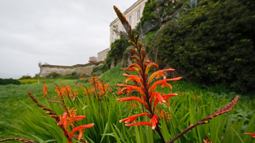 A chasmanthe flower is shown in the gardens below the main cellhouse on Alcatraz Island.
