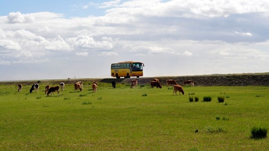 This August 2010 photo shows a tour bus passing by cows in the Inner Mongolia grasslands outside of Chifeng, China. It's no longer about the armed warriors, Genghis Khan and the robed nomads prancing through lush greenery on horseback. In China's barely populated Inner Mongolian grasslands, what had defined Mongolian culture for outsiders have long been swapped for leather outfits, motorbikes, cell phones and tourism. (AP Photo/Sisi Tang)