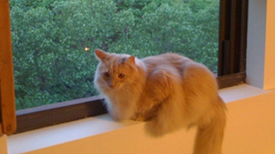 Jack the Cat escaped from his carrier at New York's JFK airport last month, as his owner traveled from New York to San Francisco.