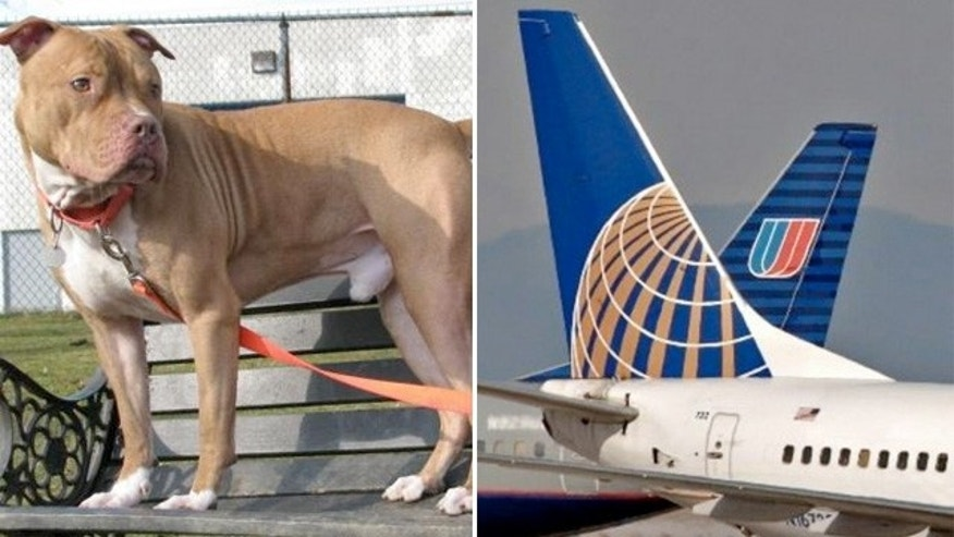 United Airlines PetSafe program bans nine breeds of dogs, inlcuding Pit Bull Terriers and American Staffordshire Terriers.