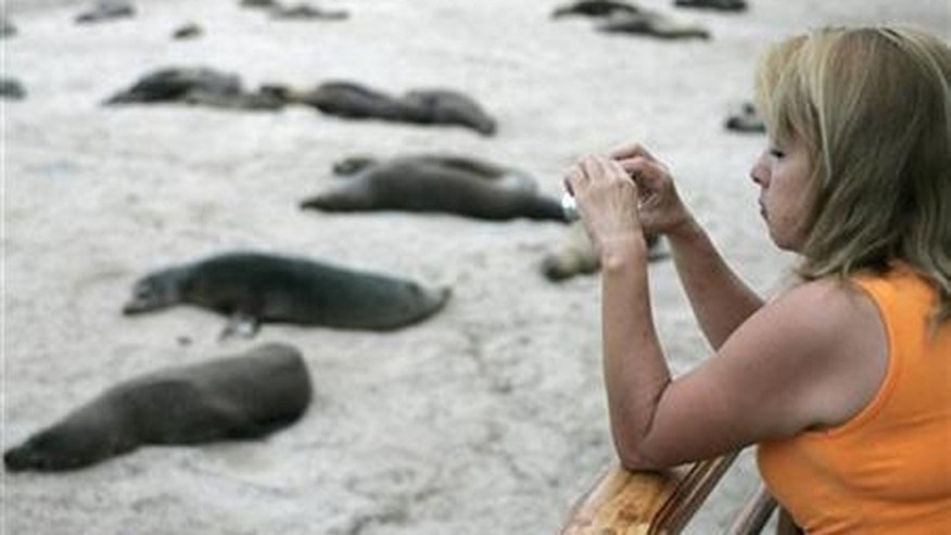 Travelers to the Galapagos can see giant tortoises, sea lions, penguins,  and can approach them.