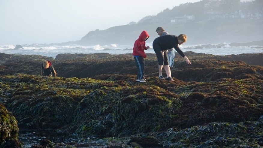 Exploring the tide pools at Half Moon Bay.