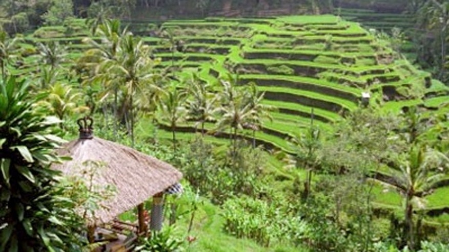 Tiered rice paddies in Bali.