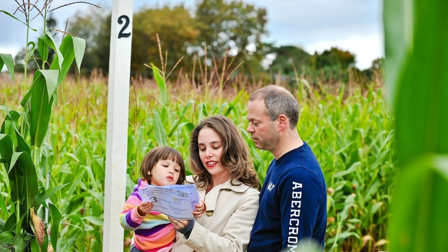 Family navigates the corn maze at Lyman Orchards.
