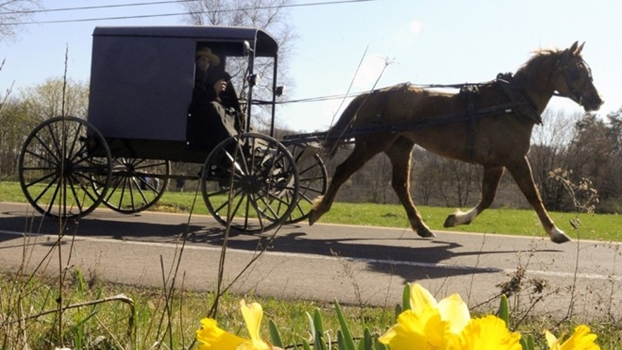 March 27, 2012: An Amish buggy passing a bunch of daffodils along Route 44 in Madison Township near White Hall, Pa.