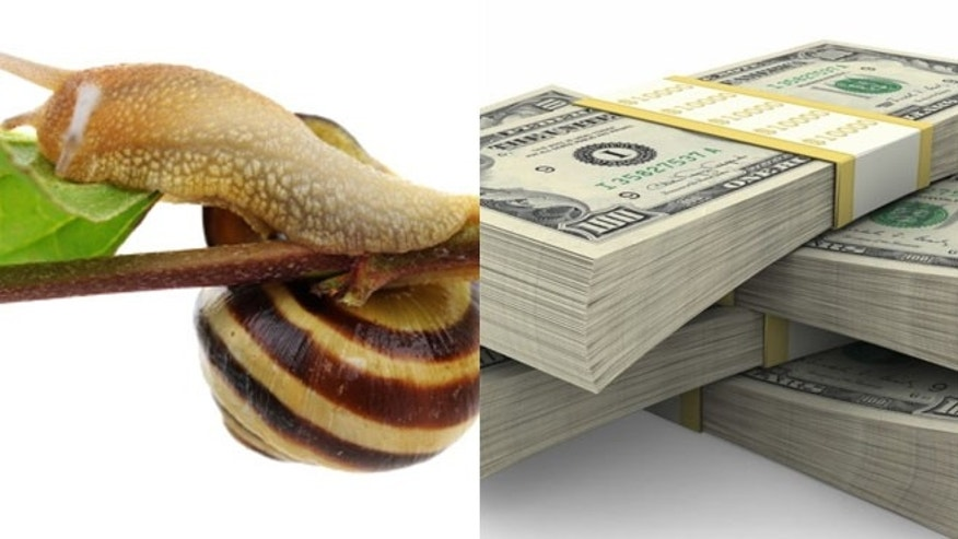Among some of the things left behind at hotel rooms were snails in a Budapest hotel room and $10,000 in cash found hidden in a U.S. hotel.