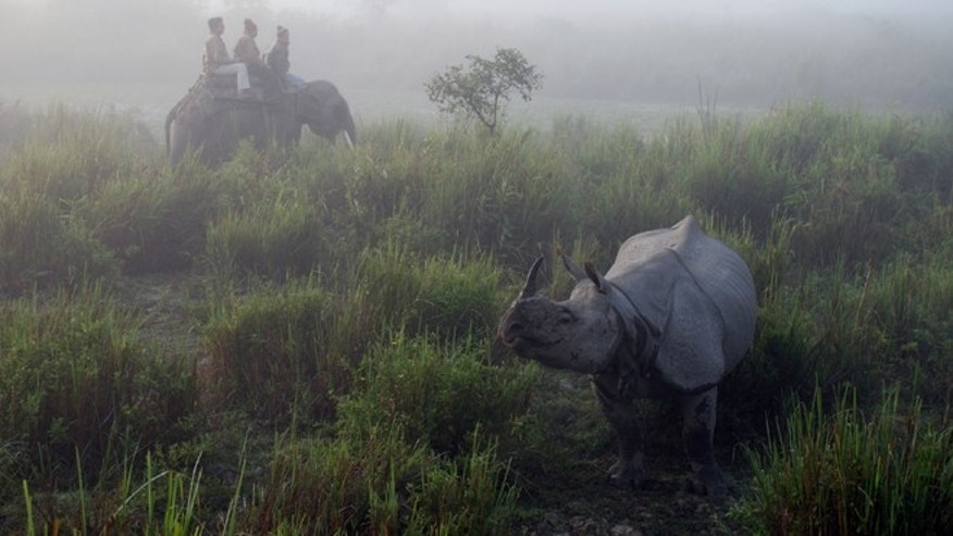 Dec. 3, 2012: Tourists at the Kaziranga National Park take an early morning ride to view one-horned Indian rhinos in the mist in Assamâs tea country in Kaziranga, India.
