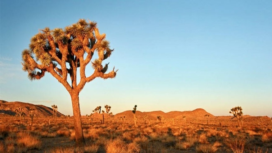 A short drive away is the Joshua Tree National Park.
