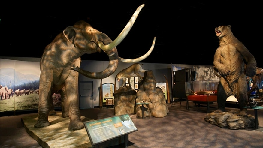 "The Denver Museum of Nature and Science's ""Mammoths and Mastodons: Titans of the Ice Age"" exhibit."