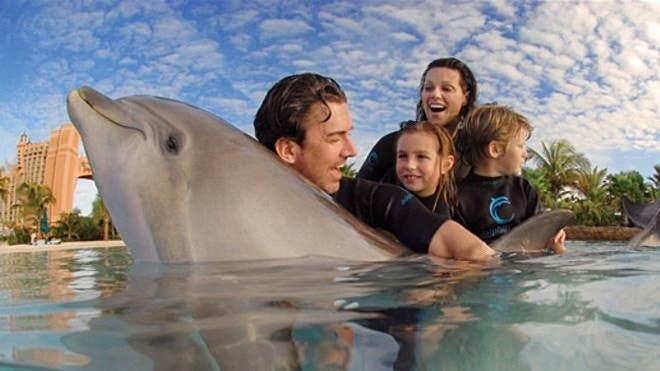 6 Places To Swim With Dolphins Fox News