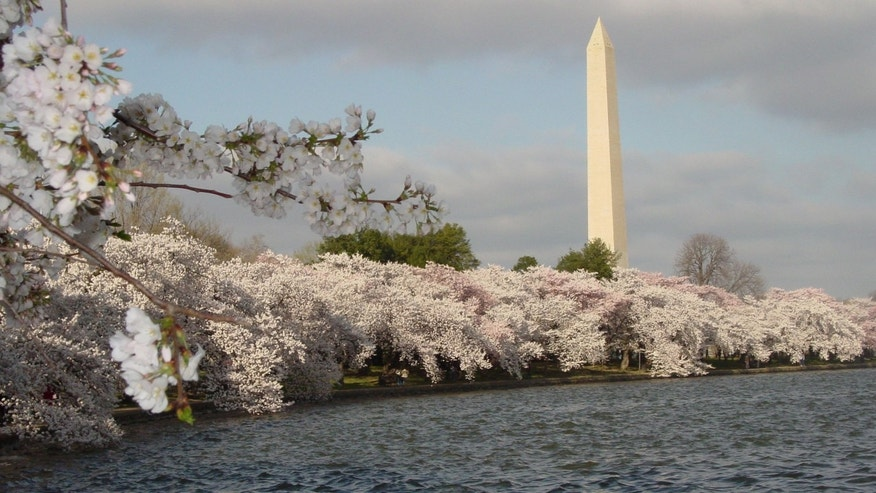 The Tidal Basin and cherry blossoms, Washington, D.C.