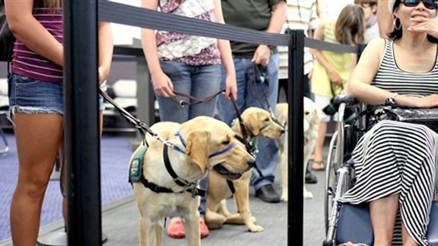 July 14, 2012,: Members and volunteers from Guide Dogs for the Blind (GDB) take a K9 flight class.