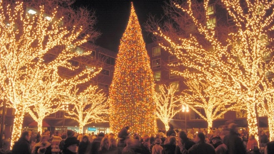 Bostonians gather to celebrate the holidays as they gaze at Cambridges beautiful Christmas tree.