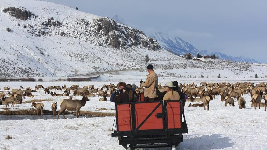 National Elk Refuge: Jackson Hole, Wyo.