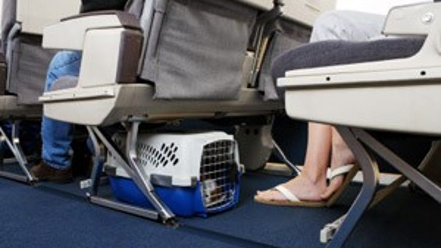 United Airlines' exotic service animal rule