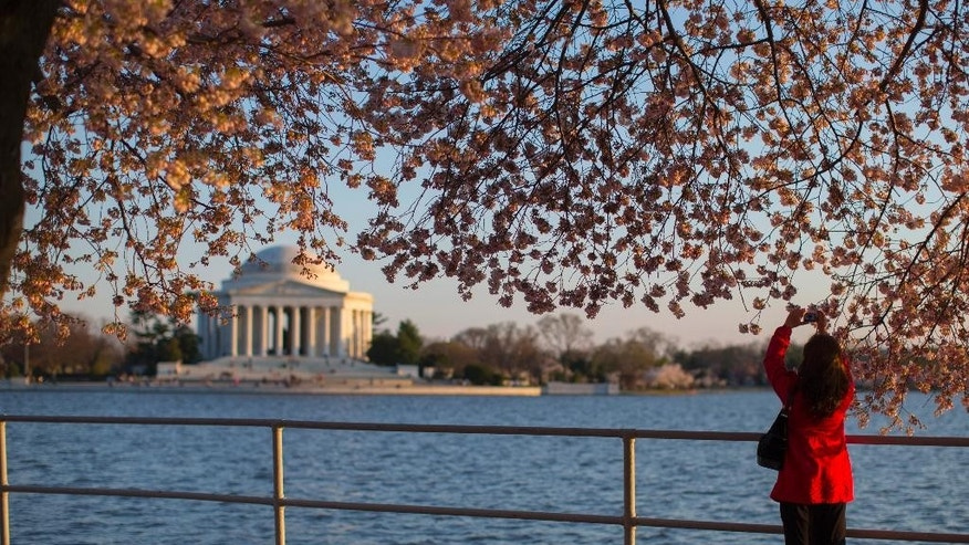 Visitors to the Tidal Basin view the cherry blossom trees as they begin to bloom, on Wednesday, April 9, 2014, in Washington. (AP Photo/ Evan Vucci)