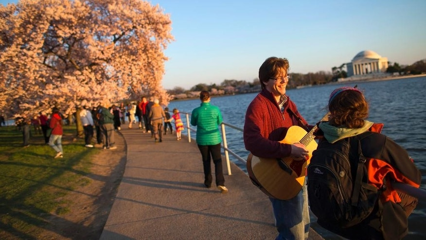 Nick Cath of Fairfax, Va., plays the guitar for Amanda Pappas, of Falls Church, Va., as they view the cherry blossom trees near the Tidal Basin, on Wednesday, April 9, 2014, in Washington. (AP Photo/ Evan Vucci)