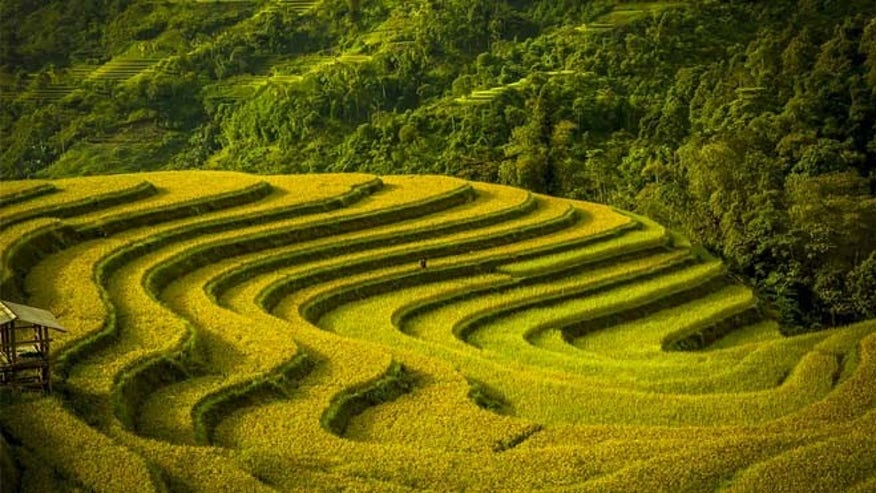 Terraced fields in Vietnam