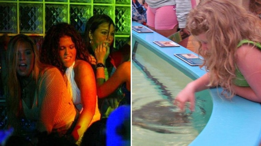 Once considered a spring break hotspot for party goers (left), Daytona is now an affordable family destination.   Kids can pet stingrays at the Marine Science Center (right) in nearby Ponce Inlet, where admission for a family of four is just $14.